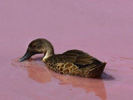 Несподівано: одне з озер стало рожевим (фото)