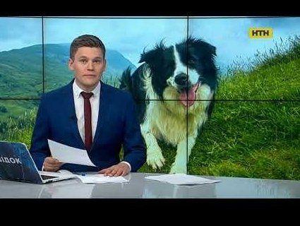 Несподівано: роми пересідають з коней на собаки
