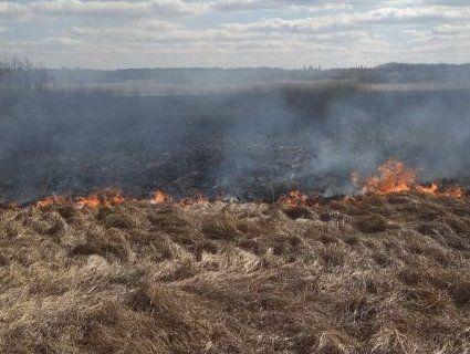 На Волині гектарами горить сухостій (фото)