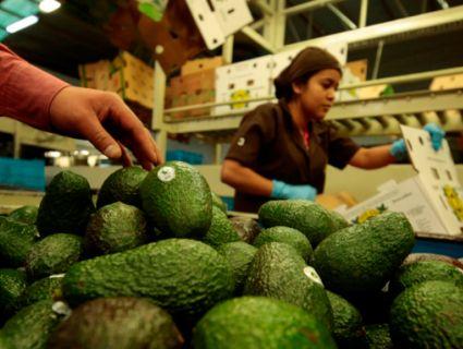 Мексика погрожує Трампу залишити США без авокадо