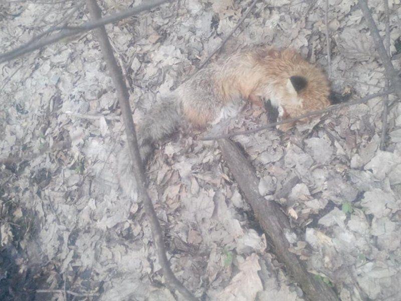 Після обробки полів масово вмирають тварини (фото)