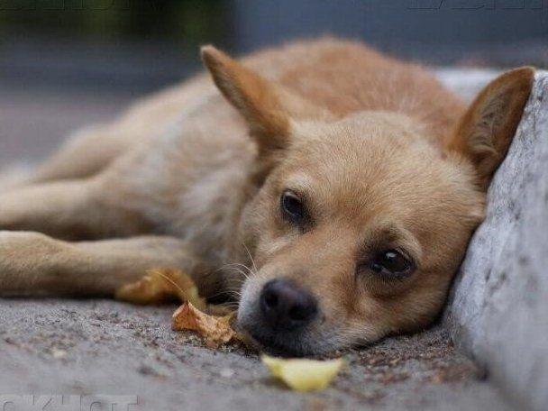 #мокріносики: лучан кличуть на фестиваль безпритульних псів