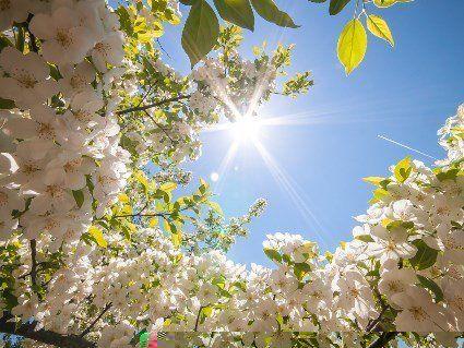 Весна в розпалі: в Україні різко потеплішає до +22