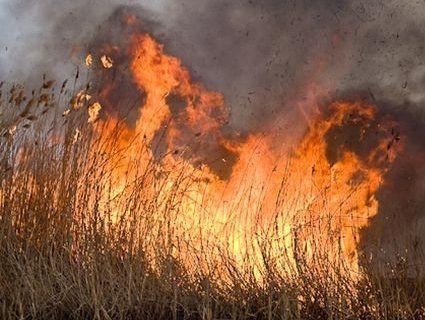Масштабна пожежа: горіло 40 гектарів очерету