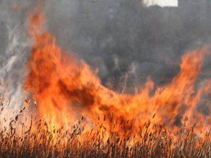 Палили траву: під Житомиром згоріло літнє подружжя