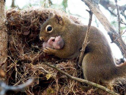 Під Луцьком намагаються врятувати новонароджених білченят (фото)