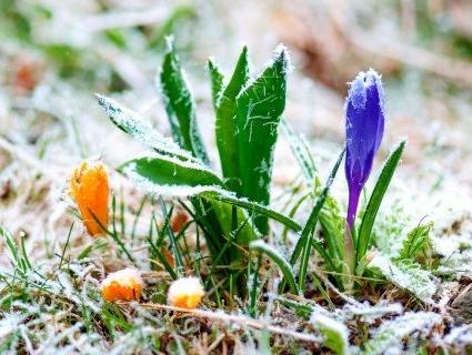 В Україну повертаються заморозки