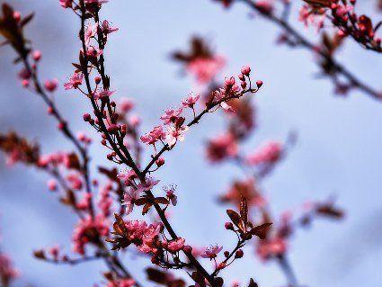 13 квітня: чому сьогодні не рекомендується пити алкоголь та садити рослини