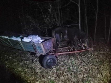 На Волині 800 кг сала намагались вивезти до Білорусії підводами (фото)
