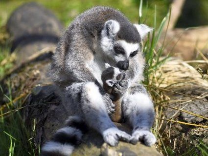 Мешканці Луцького зоопарку ніжаться під весняним сонечком (фото)