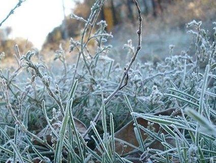 В Україну повертаються сильні заморозки