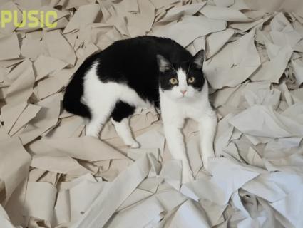 Хазяї зробили коту «ігрову кімнату» зі 100 рулонів туалетного паперу (відео)