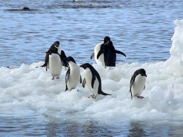 Продюсер «Х-фактору» анонсував старт нового сезону в Антарктиді