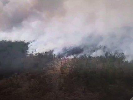 «SOS!»: на Рівненщину з Білорусі суне величезна пожежа