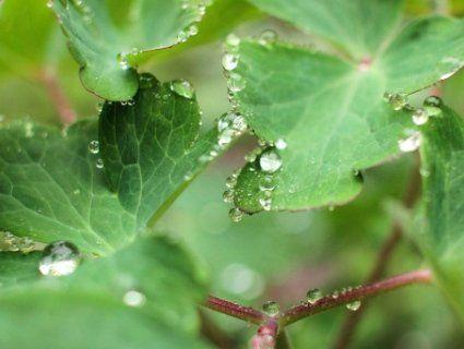 Геометрія весняного дощу на знімках відомої луцької фотографки (фото)