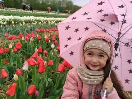 «В гумаках серед тюльпанів»: «Волинську Голландію» у дощ відвідали сотні людей (фото)