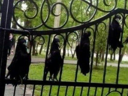 На Рівненщині тіла ворон прикували до шкільних воріт (фото)