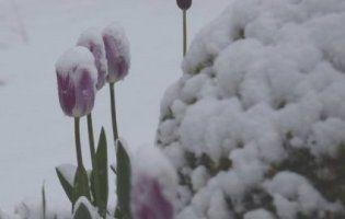 Травневий снігопад: замело південь Бельгії (фото, відео)