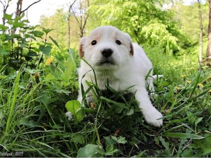 «Птахопесики»: на Рівненщині собака привела щенят у дуплі (фото)