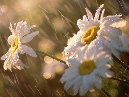 Україну «накриють» дощі з грозами