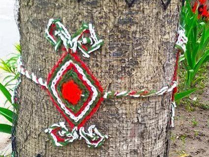 На Тернопіллі деревам одягли вишиванки (фото, відео)