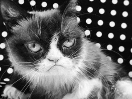 Померла легендарна сердита кішка Grumpy Cat