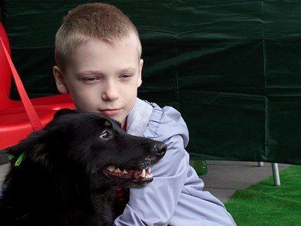 У Луцьку пройшов фестиваль «Подаруй собаці дім»: 11 безпритульних собак знайшли своїх господарів (фото, відео)