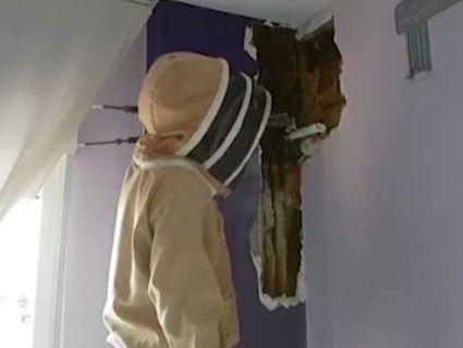 Подружжя два роки прожило з 80 тисячами живих бджіл в спальні