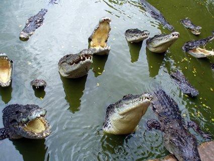 Чоловік потрапив в полон до крокодилів