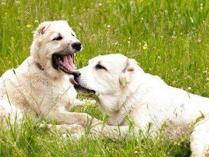 На Одещині собаки депутата пошматували хлопчика