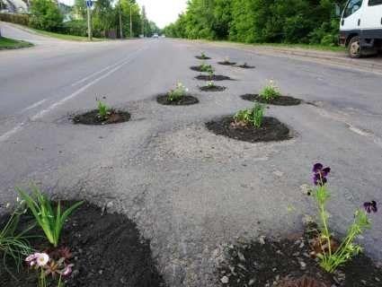 «Справжні клумби»: у Луцьку активісти висадили квіти у ями на дорогах (фото)