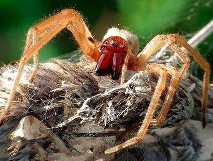 У Києві українську ведучу вкусив небезпечний павук