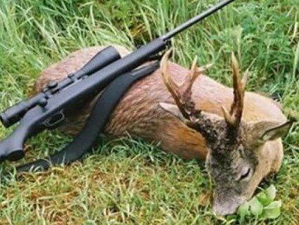 На Волині браконьєри застрелили молодих оленів