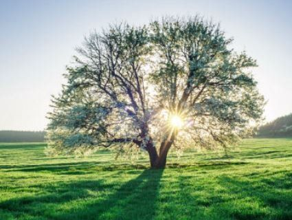 31 травня: чому сьогодні категорично не можна рубати дерева