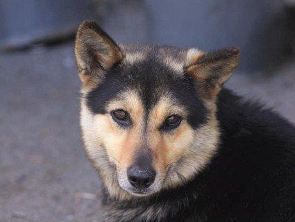 «Хатіко» з Любитова: на Волині пес тиждень чекає господаря на зупинці (відео)