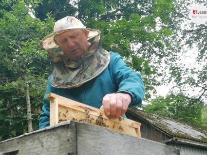 Відомий пасічник з Волині розповів, як спинити загибель бджіл через кроплення полів (відео)