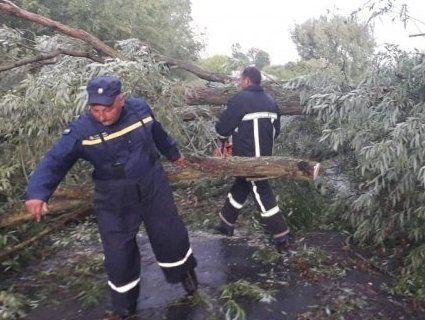На Волині негода повалила дерева на дороги (фото)