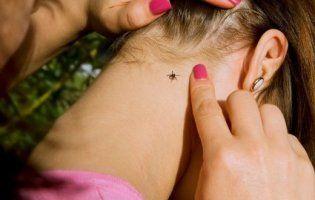 «Кишить кліщами»: у луцькому парку дитина заразилася хворобою Лайма