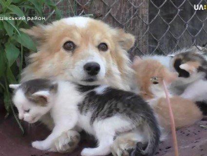 Сила материнського інстинкту: в селі на Волині собака «всиновила» кошенят (відео)