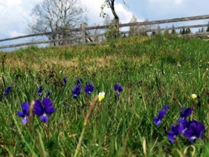 11 червня: роботу в полі та городі треба відкласти