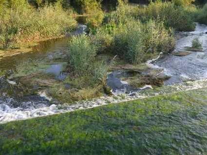 На Харківщині  в річку викинули гниюче м'ясо: наслідки катастрофи складно уявити