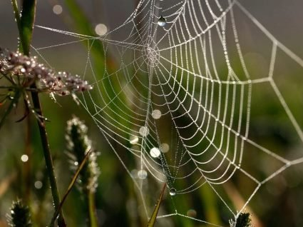 13 червня: павуки почали плести павутину – чекайте доброї погоди