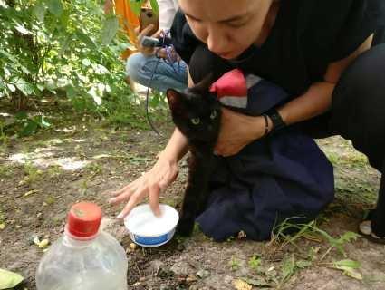 «Пухнастий альпініст»: у Луцьку рятували кота, який тиждень прожив на дереві (відео)