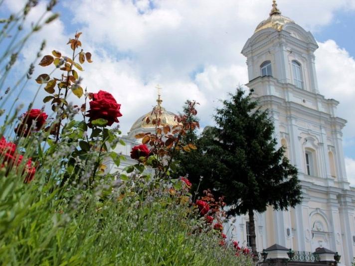 Трояндовий рай у центрі Луцька (фото)