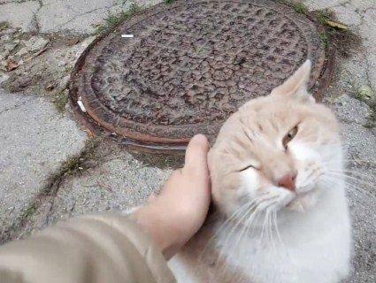 У Львові проведуть «перепис» вуличних котів