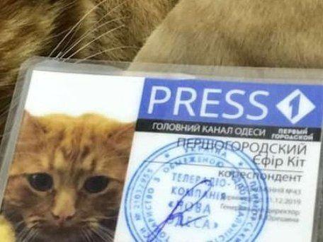 Котиків вам у стрічку: в Україні з'явився перший пухнастик-журналіст (фото)