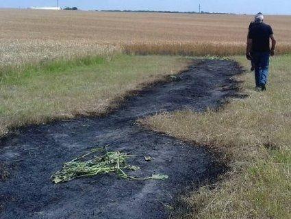 Палили сухостій – мало не згоріло 87 гектарів пшениці