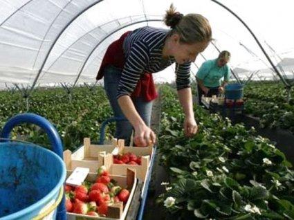 Українці масово їдуть на заробітки до Польщі: що відомо