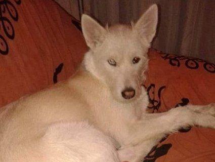 Можуть приспати: у Луцьку просять врятувати собаку загиблої жінки
