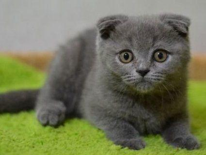 Домашні улюбленці: яку небезпеку можуть нести коти